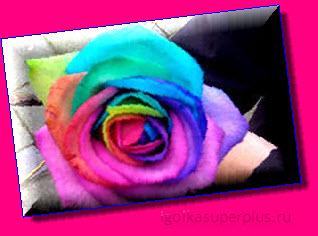 Яркий цвет - радуга нашей жизни